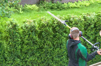 Approved Hedge Cutting